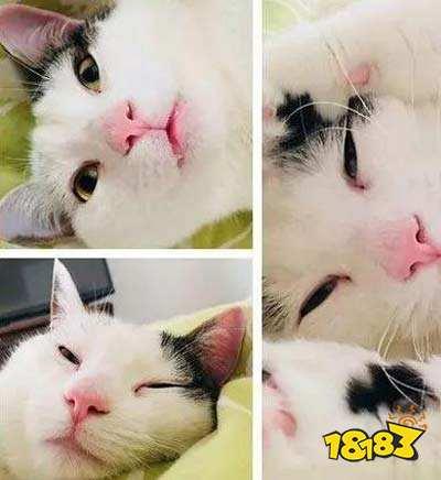 不应当,我只是只小猫咪,不该承受假笑的烦恼