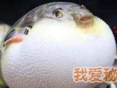 明日之后鱼有什么用?鱼的属性是什么?