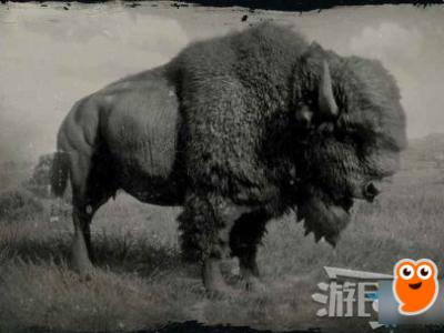 《荒野大鏢客2》美洲野牛在哪 美洲野牛獵取攻略