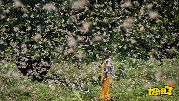 蚂蚁庄园5.20答案是什么 支付宝蚂蚁庄园5月20日答案分享