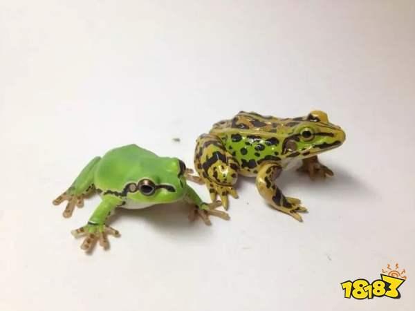 夏季雨后蛙声一片,除了肺之外青蛙还靠哪个器官来呼吸 蚂蚁庄园今日答案5月22日