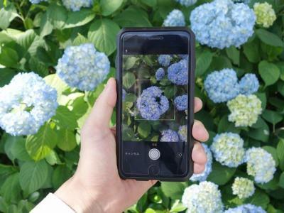 好用的植物识别软件有哪些 能识别植物的APP大全